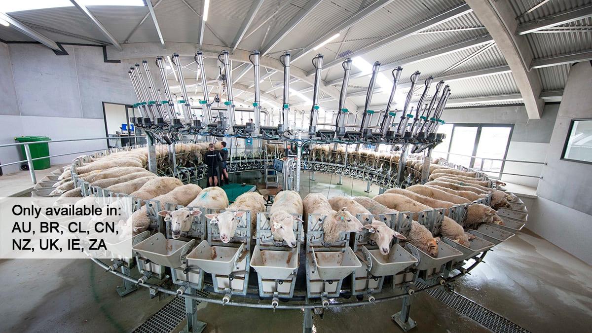 Sala de ordeño rotativa interna para ovejas y cabras